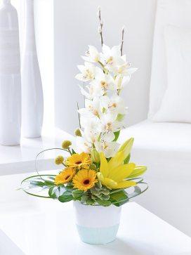 germini and orchid arrangement