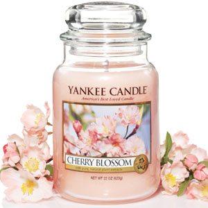 yankee cherry blossom